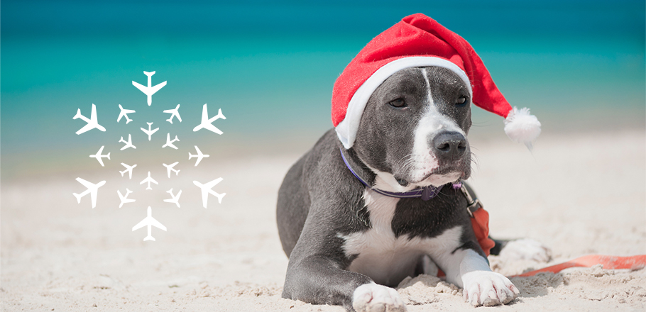 A dog with a Santa hat on laying on a beach.